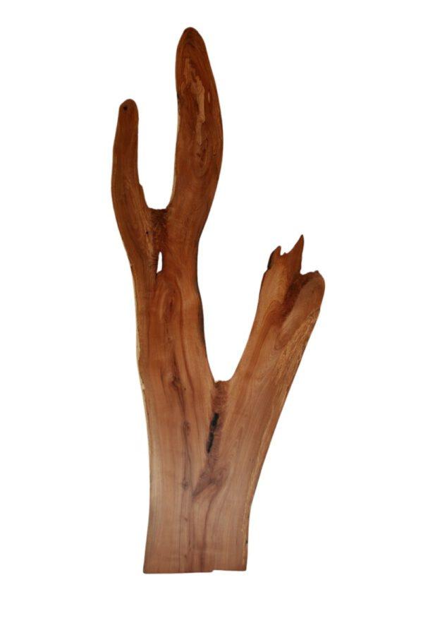 Holzbild Kaktus