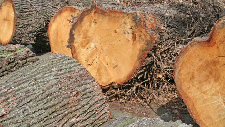 Gutes Holz braucht Zeit