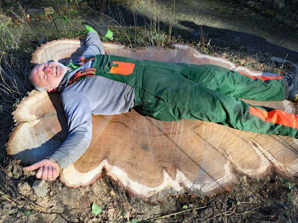 Baumstumpf einer alten Eiche abgesägt