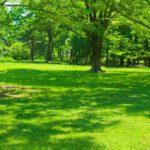 Bäume als Schattenspenderr