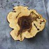Kastanien Baumscheibe im Fällschnitt